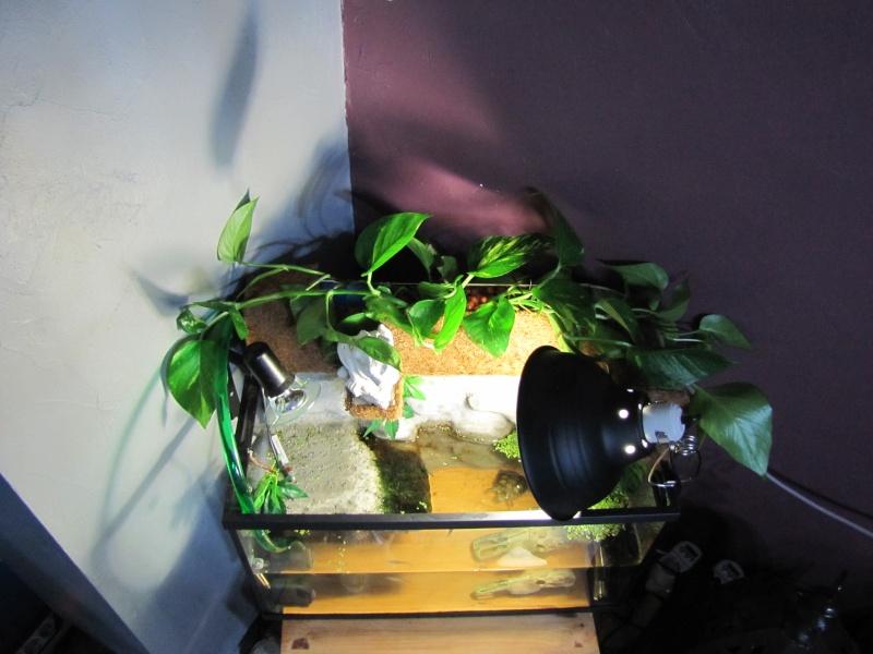 filtre gouttière ( bac à fleurs) Img_4318