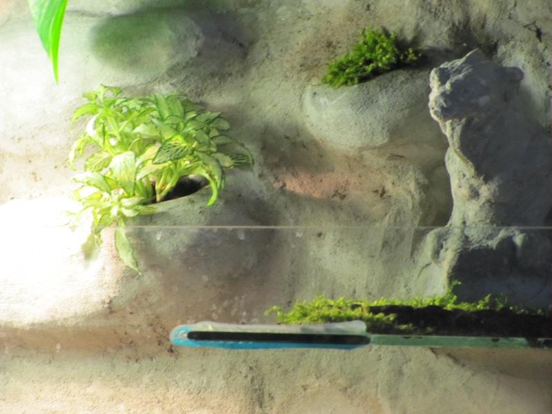 nouvelle aqua et decor en mortier hydro Img_4323
