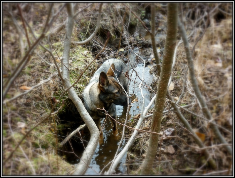 Encore une fois ... Balade en Forêt!! :) P1140912