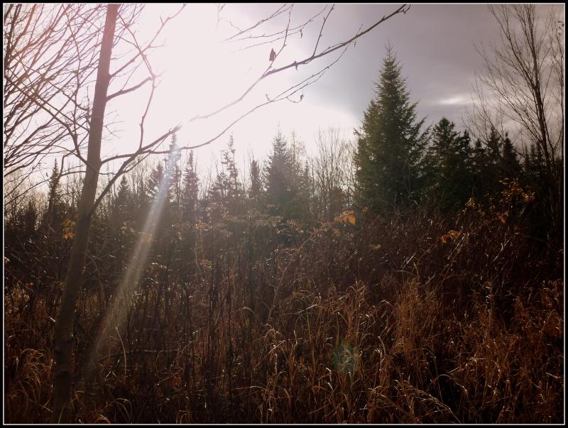 Encore une fois ... Balade en Forêt!! :) P1140913