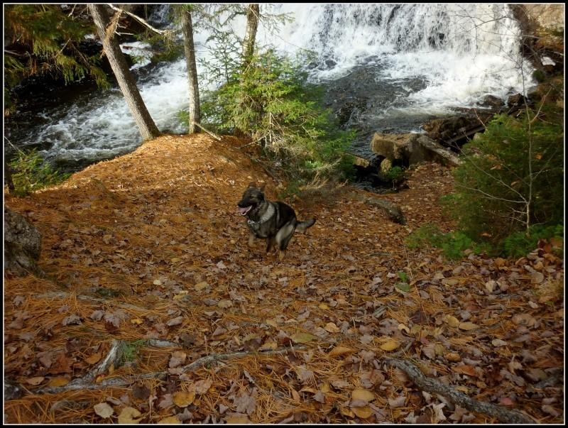 Encore une fois ... Balade en Forêt!! :) P1150011