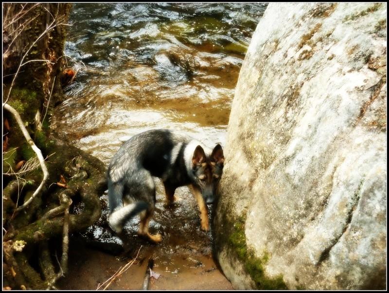Encore une fois ... Balade en Forêt!! :) P1150016