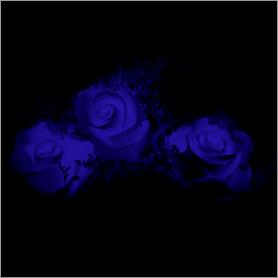 La fleur de Rose - Page 7 Bleu10