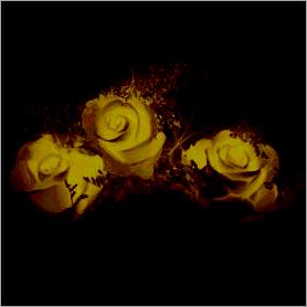 La fleur de Rose - Page 2 Jaune10