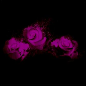 La fleur de Rose - Page 2 Rose10