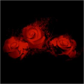 La fleur de Rose Rouge10