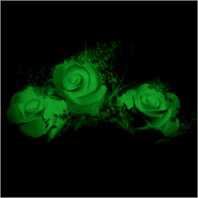 La fleur de Rose Vert10