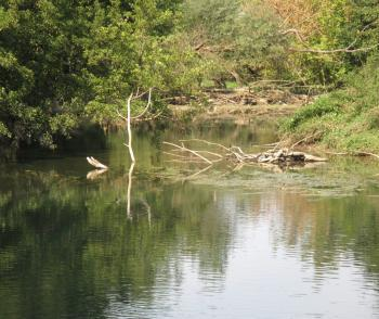 Un chasseur se noie dans l'Adour Canard10