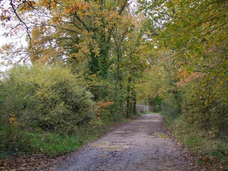 Cairn de Novembre 2012 - Page 6 Dscf7818
