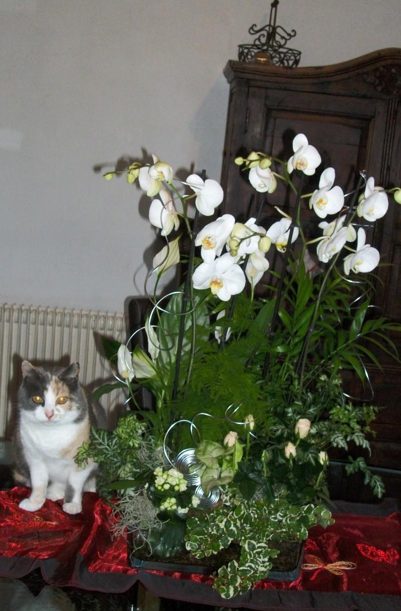 Les orchidées Rungis10