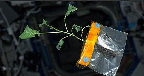 [ISS] Expédition 31: Déroulement de la mission - Page 2 Sans1061