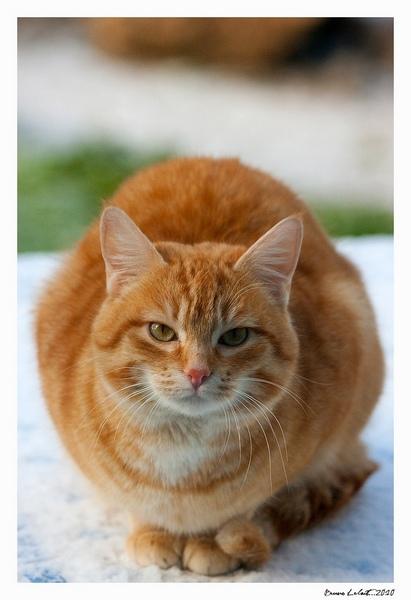 mes miens de chats ;) _mg_9911