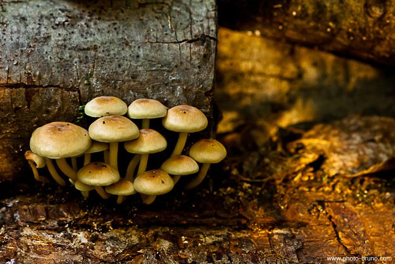 19 -  Concours 'Champignons&couleurs d'automne'......photos reçues !!! Bl_210