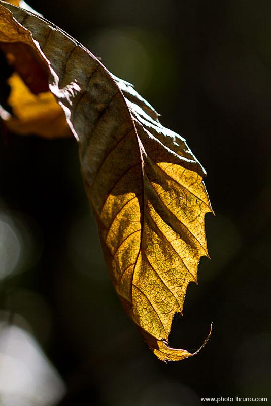 19 -  Concours 'Champignons&couleurs d'automne'......photos reçues !!! Bl_610