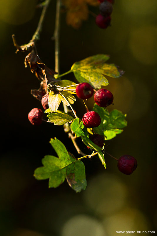 19 -  Concours 'Champignons&couleurs d'automne'......photos reçues !!! Bl_810