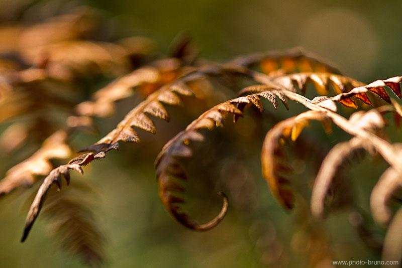 19 -  Concours 'Champignons&couleurs d'automne'......photos reçues !!! Bl_910