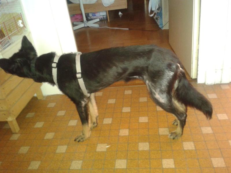 > Mika, un amour de petite chienne, née en mai 2011 - Adoptée 2012-010