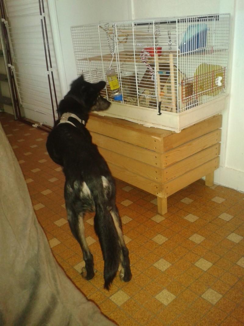 > Mika, un amour de petite chienne, née en mai 2011 - Adoptée 2012-011