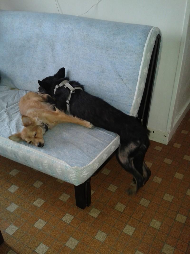 > Mika, un amour de petite chienne, née en mai 2011 - Adoptée 2012-012