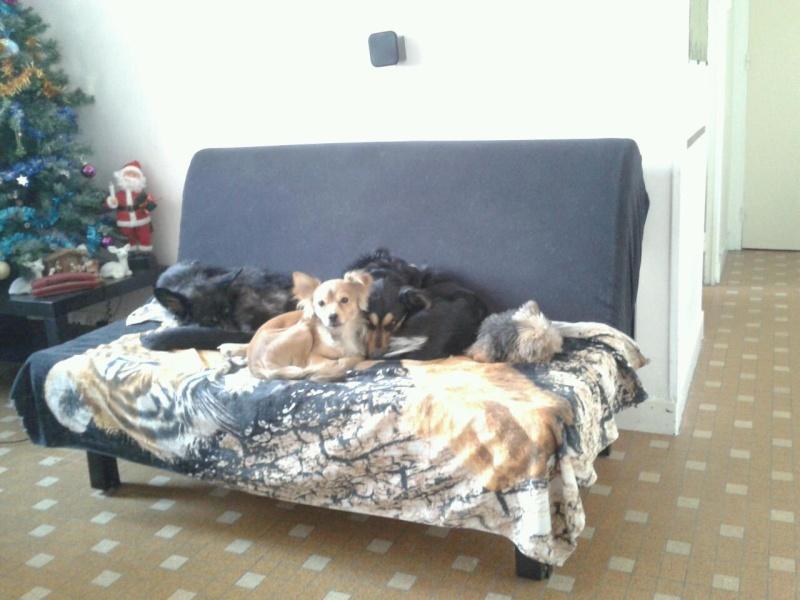 > Mika, un amour de petite chienne, née en mai 2011 - Adoptée 32352110