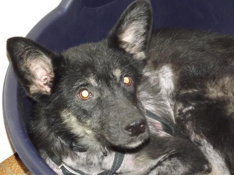 > Mika, un amour de petite chienne, née en mai 2011 - Adoptée Dscf1114