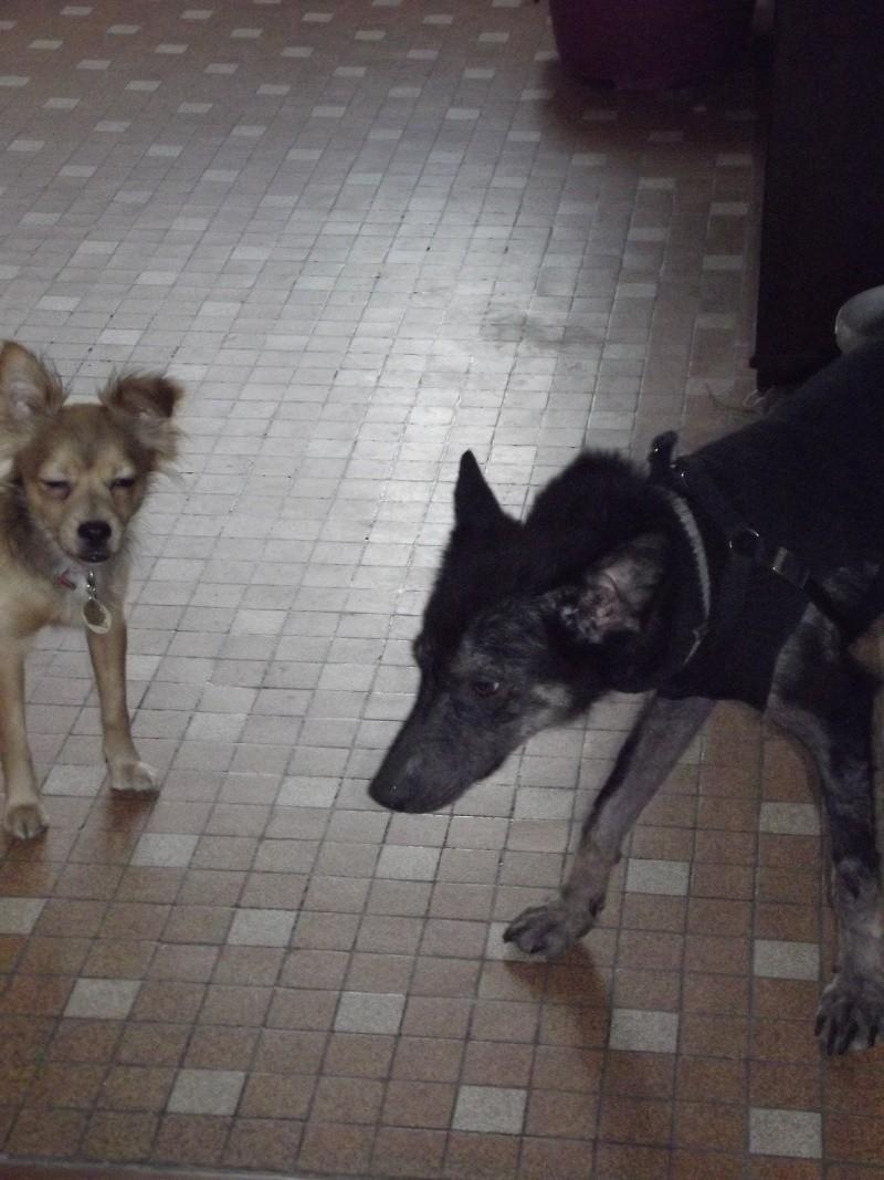> Mika, un amour de petite chienne, née en mai 2011 - Adoptée Dscf1116