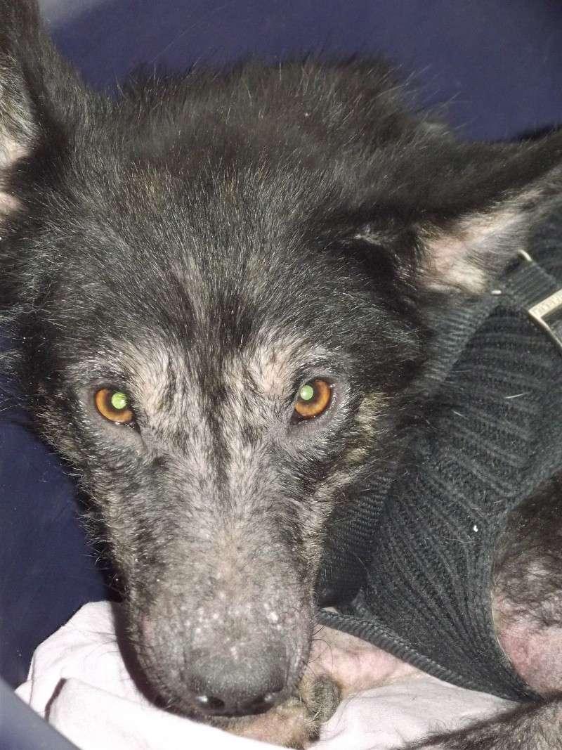 > Mika, un amour de petite chienne, née en mai 2011 - Adoptée Dscf1118