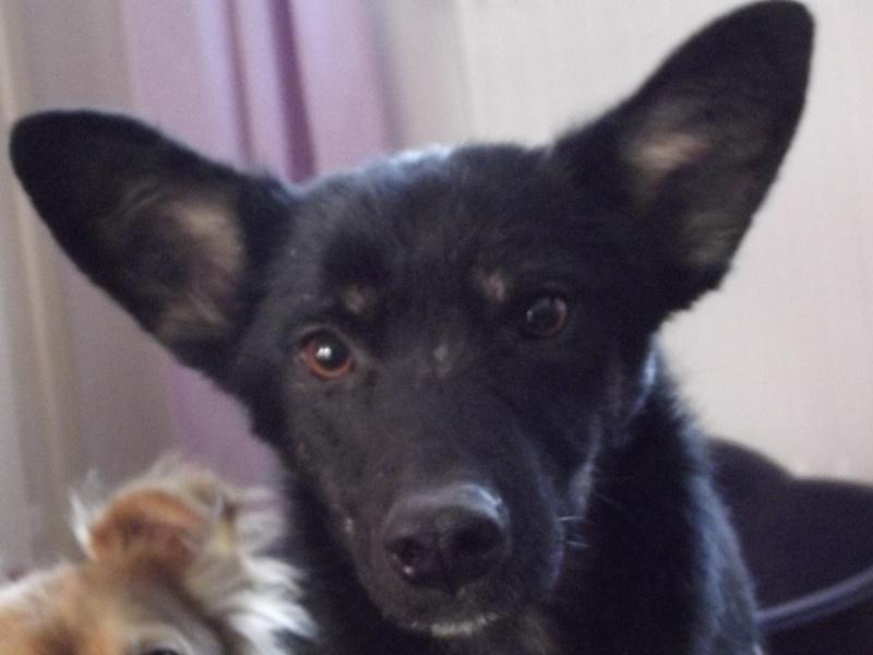 > Mika, un amour de petite chienne, née en mai 2011 - Adoptée Dscf1310