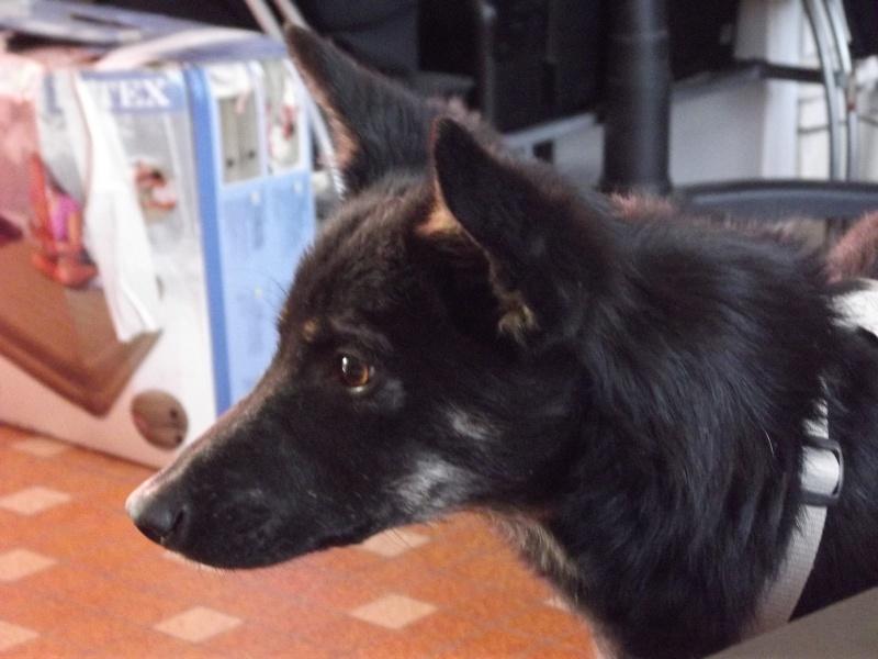 > Mika, un amour de petite chienne, née en mai 2011 - Adoptée Dscf1312