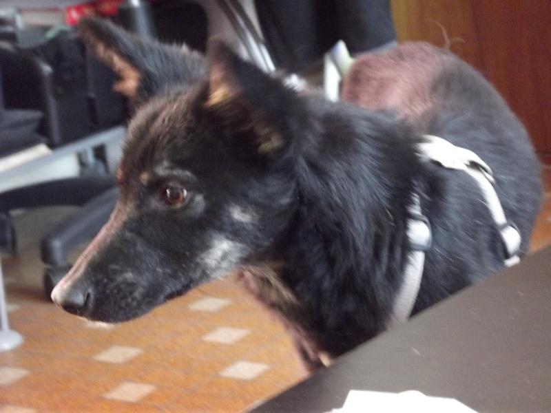 > Mika, un amour de petite chienne, née en mai 2011 - Adoptée Dscf1313