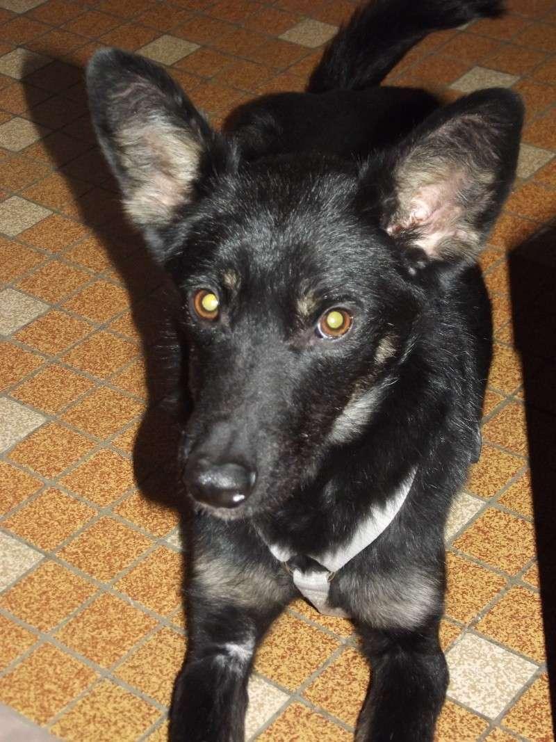 > Mika, un amour de petite chienne, née en mai 2011 - Adoptée Dscf1315