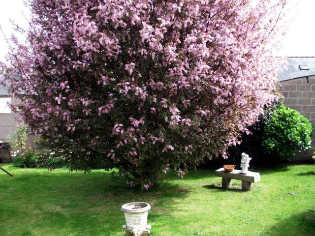 emeraude coté jardin Imgp0316
