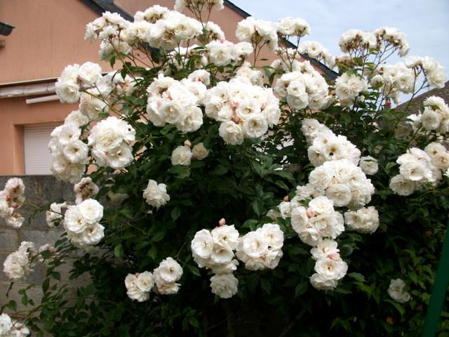 emeraude coté jardin Imgp0446