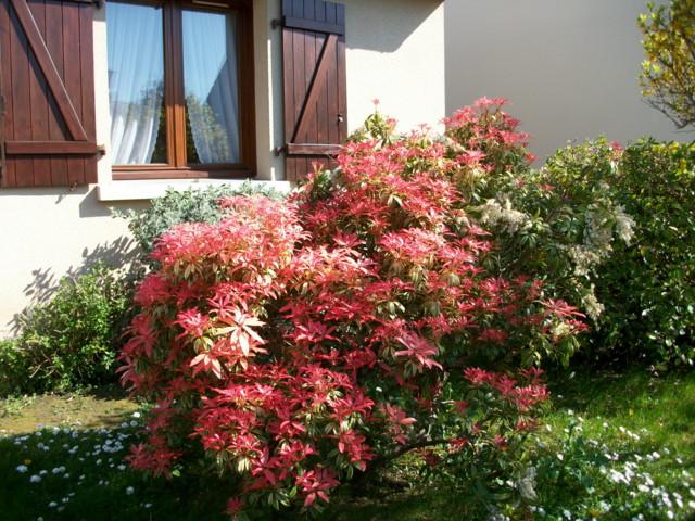emeraude coté jardin Imgp0569