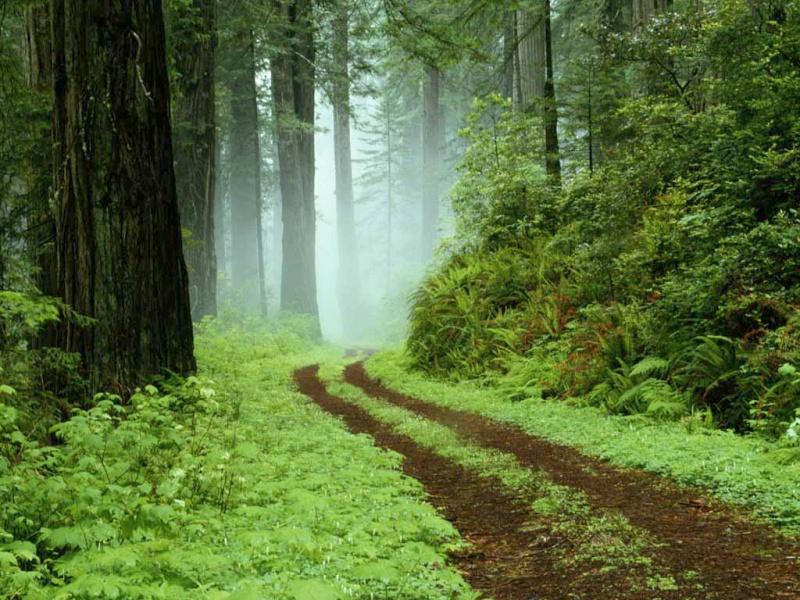 Quelle vue ... Forest10