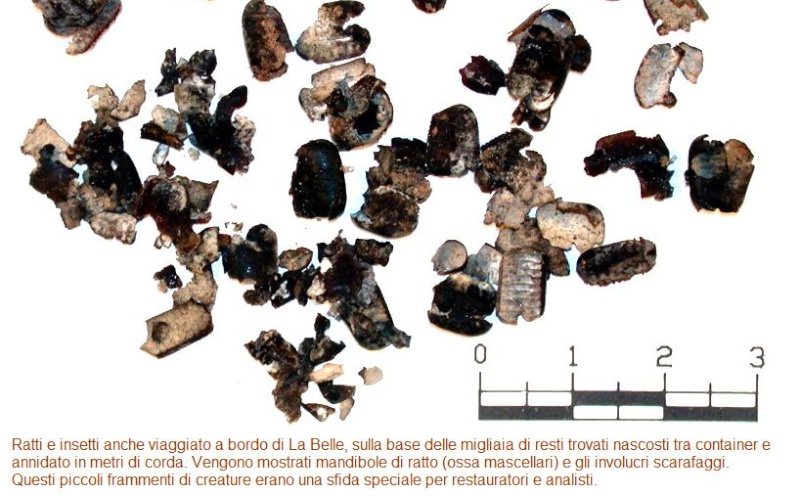 LA BELLE 1684 scala 1:12 - Pagina 4 Cattur72
