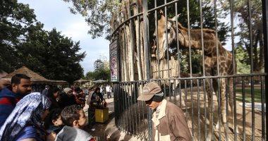 الناس اللى هتزور حديقة الحيوان اليوم - لأول مرة مفاجآت مبهرة فى متحف الحيوان بحديقة الجيزة 20190112
