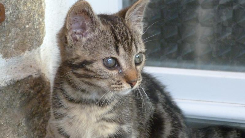 GABY, chatonne tigrée noir et blanche, née en 2011 Gaby_310