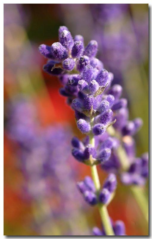 L'Alphabet de la Flore 80685610