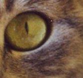 A qui appartient cet oeil ? - Page 3 Gribou10