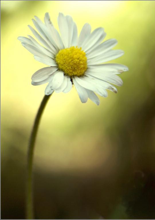 L'Alphabet de la Flore Paquer11