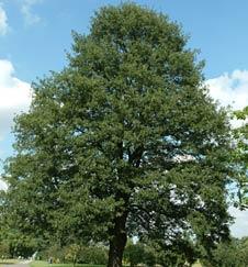 L'Alphabet de la Flore Tree_q10