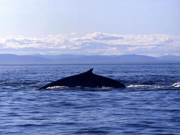 Quebec      Balein10