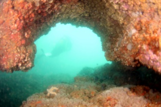 Atlantic Diving, Portugal 10210