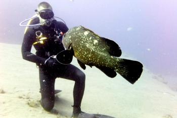 Lanzarote Diving Dscf6312
