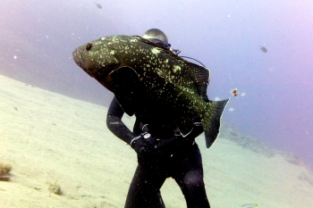 Lanzarote Diving Dscf6313