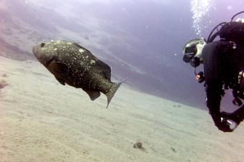 Lanzarote Diving Dscf6315