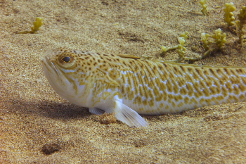 Lanzarote Diving Dscf6321