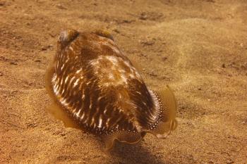 Lanzarote Diving Dscf6324
