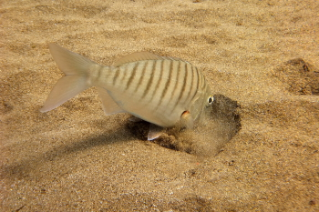 Lanzarote Diving Dscf6326